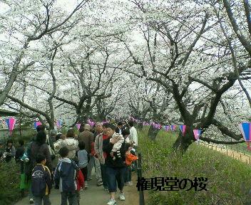 Nec_0002桜