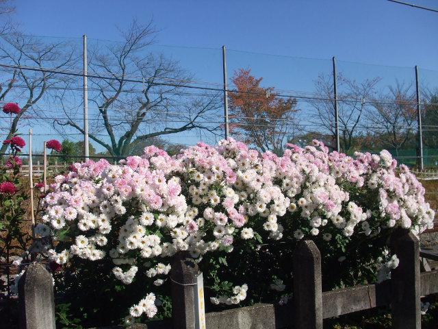 Blog2008_11300028