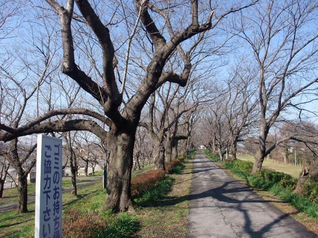 Blog2008_12180030