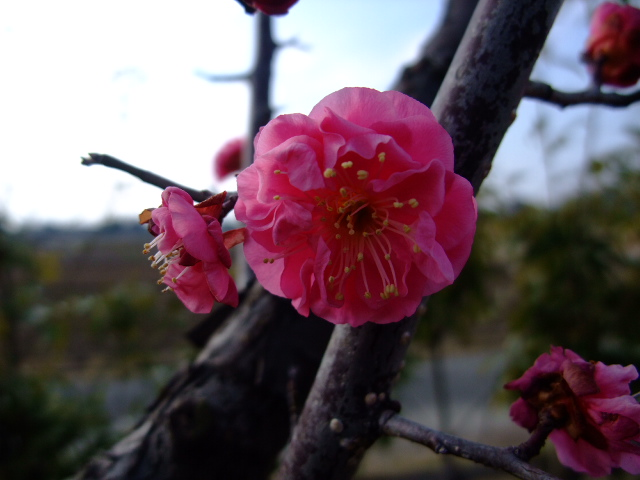 Blog2009_02040014