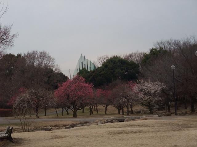 Blog2009_02090046