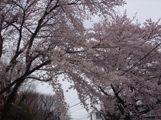 Blog2009_04060035