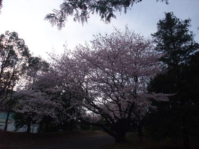 Blog2009_04060045