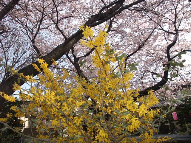 Blog2009_04080039