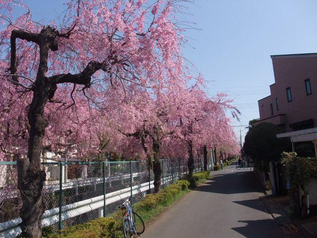 Blog2009_04090015