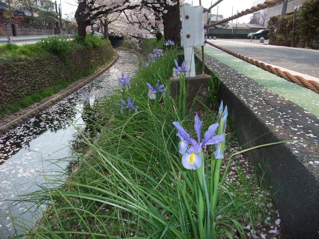 Blog2009_04080035