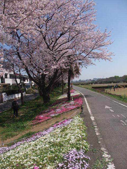 Blog2009_0407cr0026