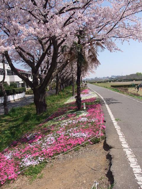 Blog2009_0407cr0027