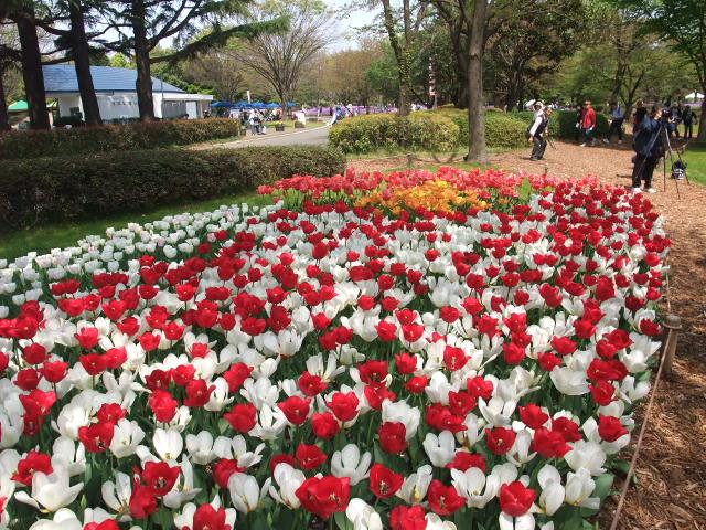 Blog2009_04160043