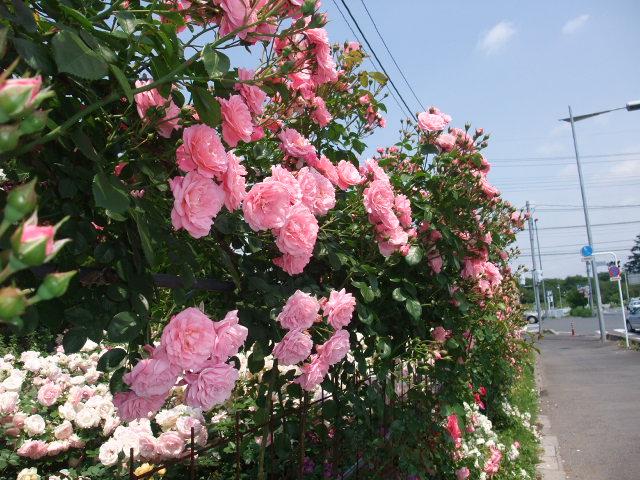 Blog2009_05250034