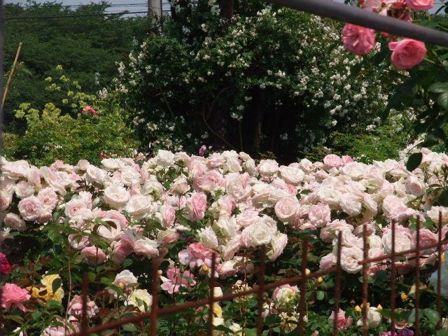 Blog2009_05250037