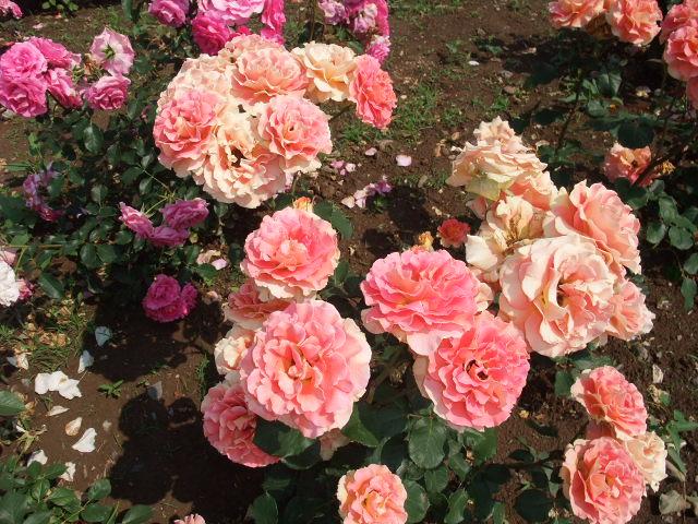 Blog2009_05250044