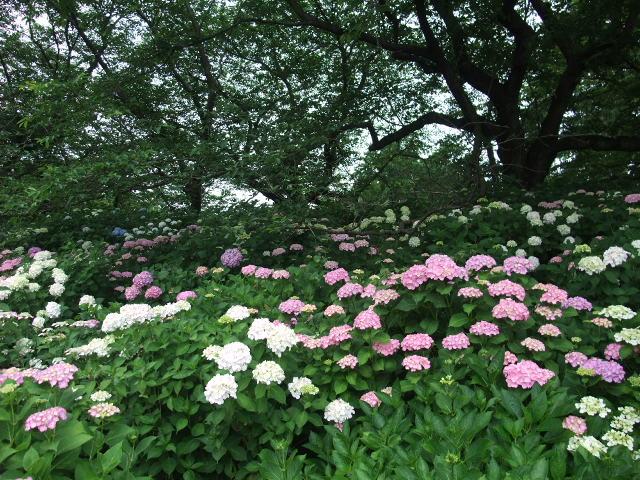 Blog2009_06090034