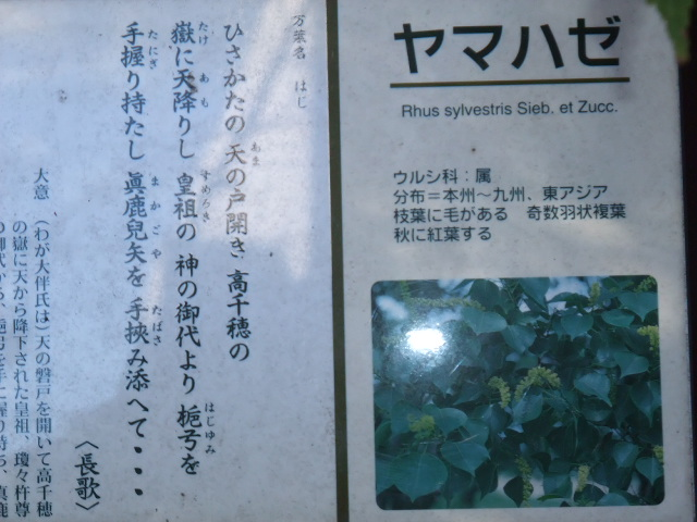 Blog2009_11180066