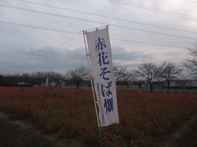 Blog2009_11290012