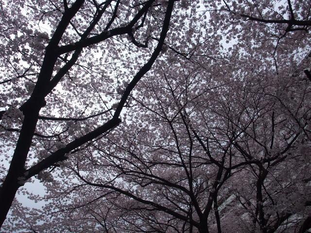 Blog2010_04040008