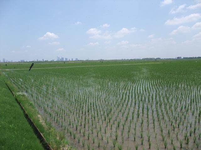 Blog2010_0531arakawa0008
