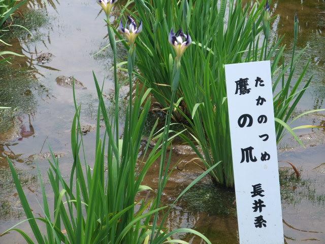 Blog2010_06120094