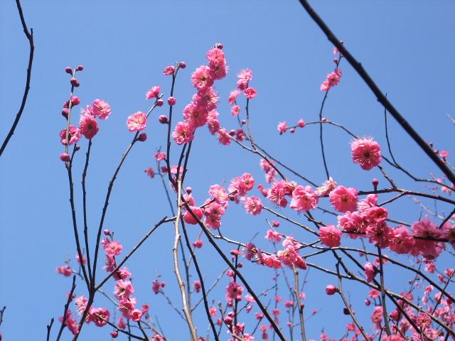 Blog2011_02130015