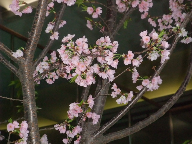 Blog2011_03120025
