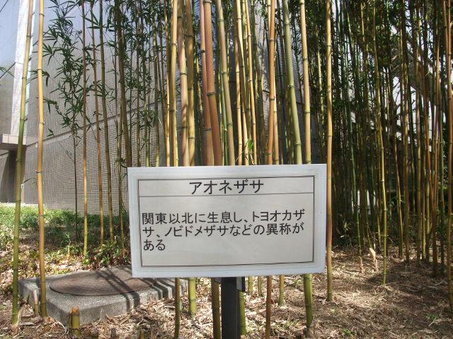 Blog2011_03120030