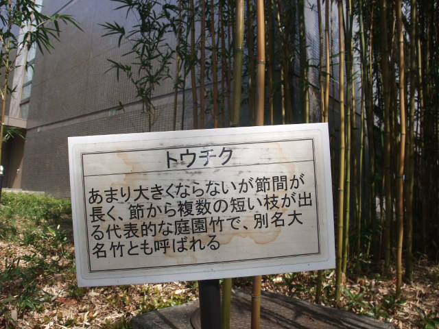 Blog2011_03120031