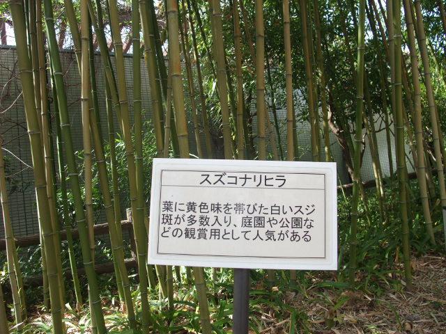 Blog2011_03120033