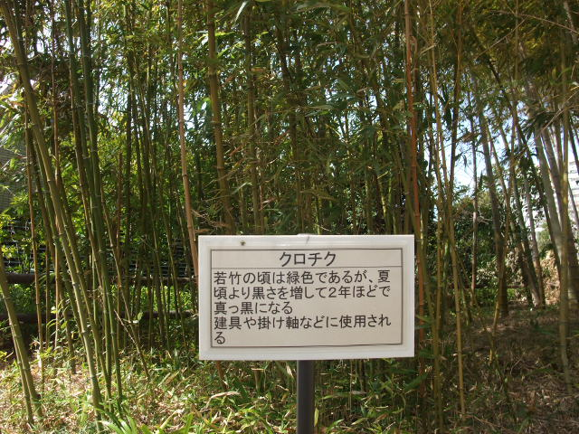 Blog2011_03120035