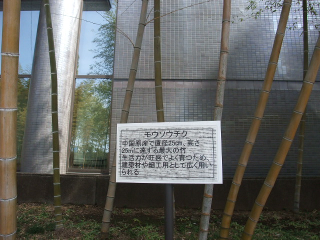 Blog2011_03120037