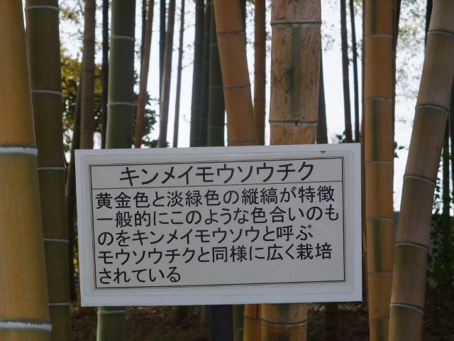 Blog2011_03120038