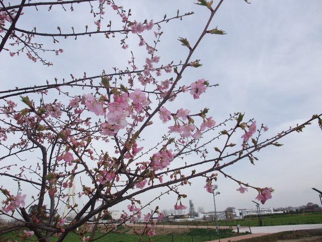 Blog2011_03170011