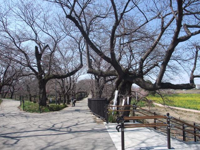 Blog2011_03280006