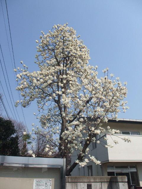 Blog2011_03300023