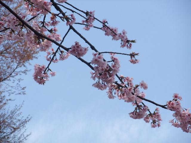 Blog2011_04020012
