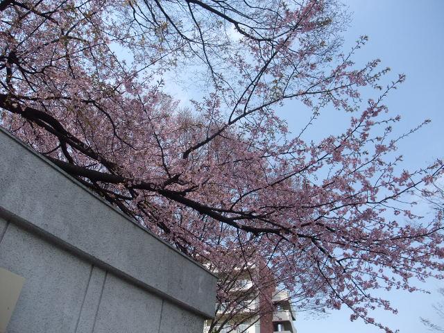 Blog2011_04020014