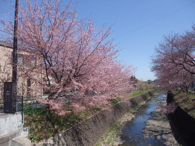 Blog2011_04040019