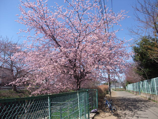 Blog2011_04040020