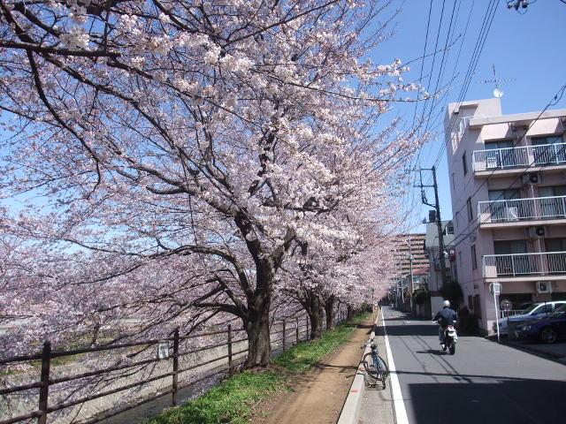 Blog2011_04040021