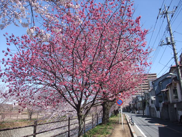 Blog2011_04040022