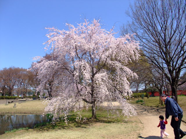 Blog2011_04060021