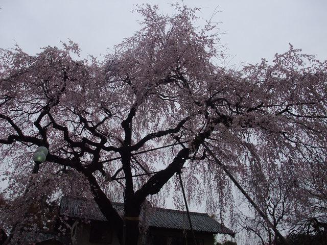 Blog2011_04070067