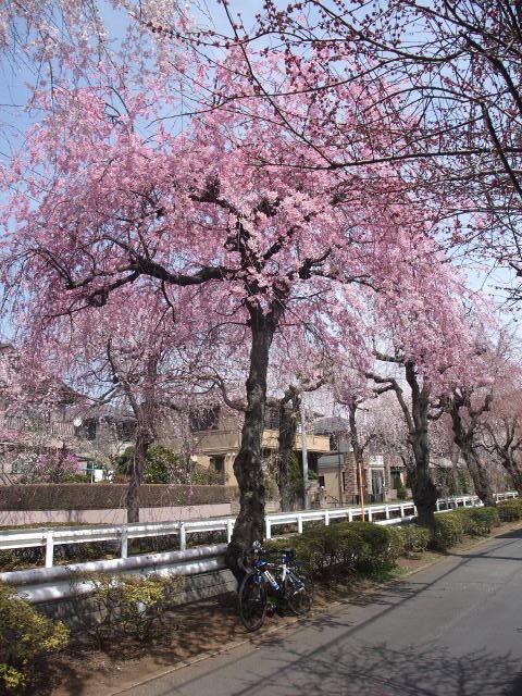 Blog2011_04070094