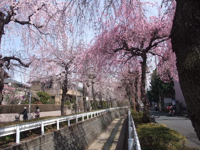 Blog2011_04070095