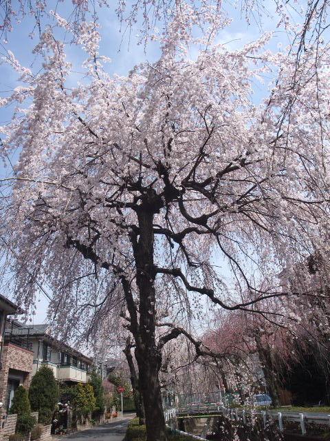 Blog2011_04070098