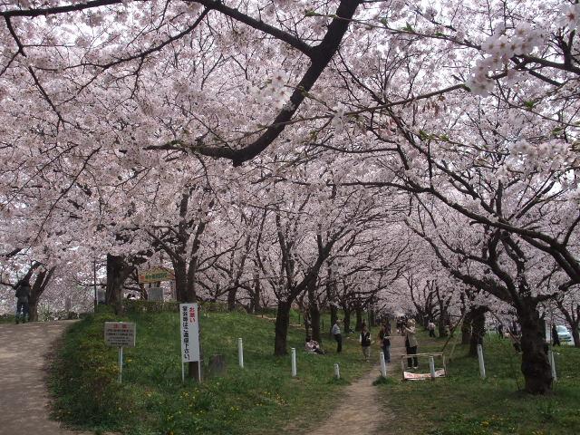 Blog2011_04120052