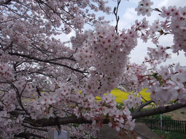 Blog2011_04120057