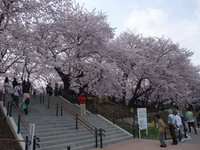 Blog2011_04120058