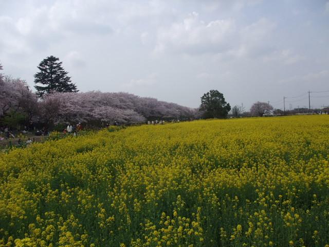 Blog2011_04120059
