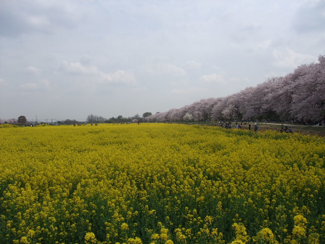 Blog2011_04120060