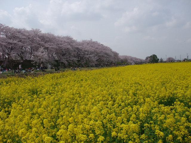 Blog2011_04120061